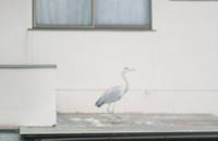 屋根と鳥.jpg