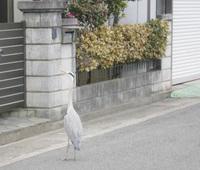 家と鳥.jpg