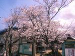 写真sakura.jpg