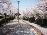 新保緑道公園2.jpg