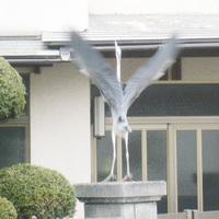 飛ぶ鳥.jpg